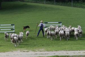 羊飼いはひつじの扱い方を心得ている